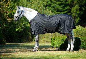 Back on Track Pferd