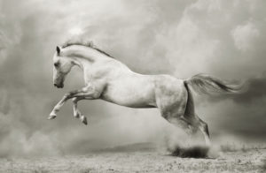 Insektenspray Pferd