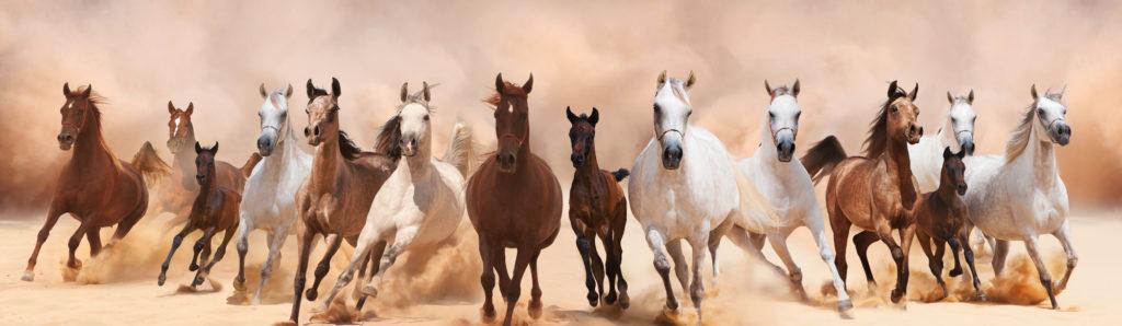 Pferdedecken-Vergleich